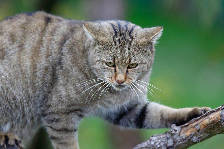 Jonge wilde katjes