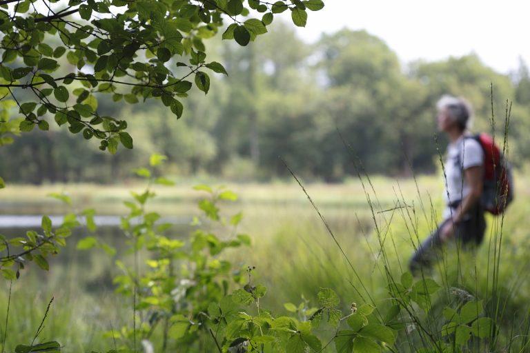 Shinrin-yoku: het bos als dompelbad