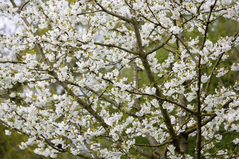 Het is voorjaar: Roots geeft 3 tips voor een bloesemwandeling