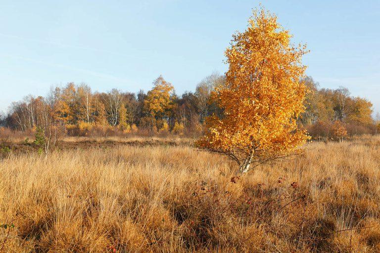 Holtingerveld & de Havelterberg: wandelen door een oerlandschap