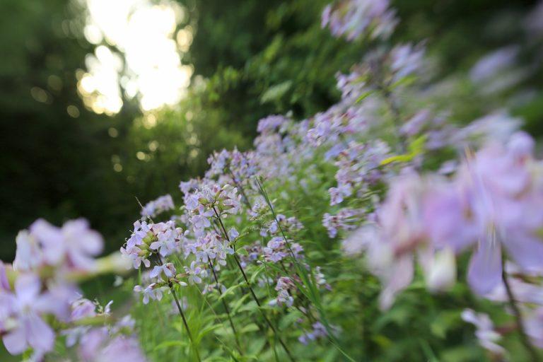 Maak een verbluffende reis door de wereld van de planten