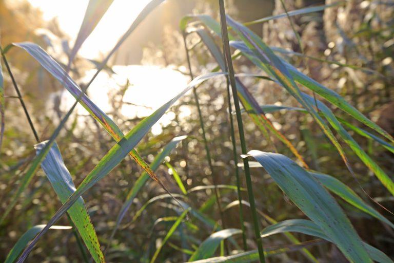 Groen doen in november: tips voor een duurzaam leven