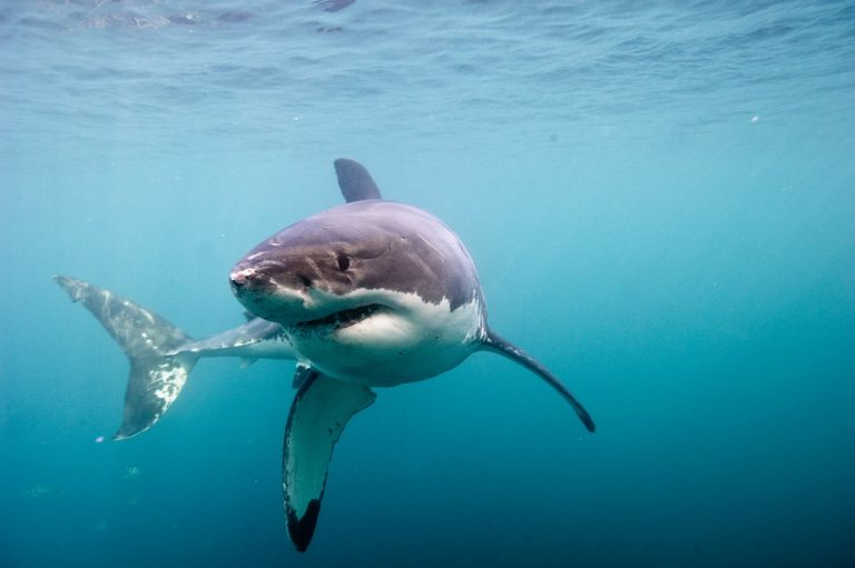 Winnen: kaartjes voor de film Great White Shark