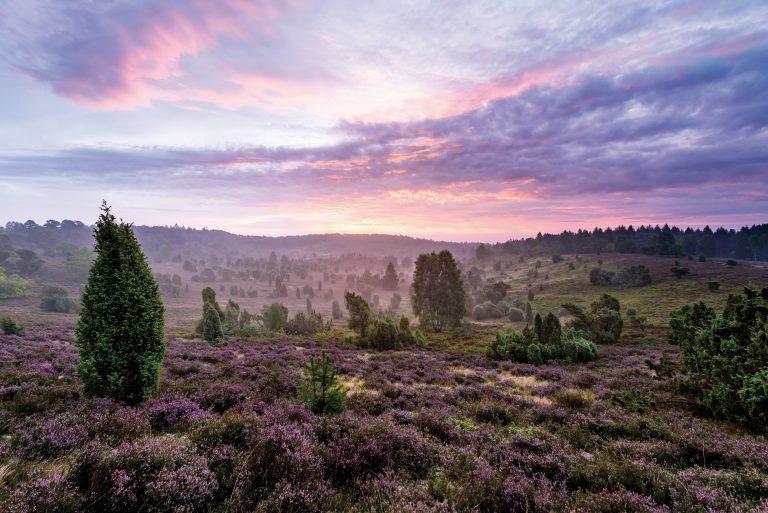 3x prachtige nationale parken in Duitsland – van heides tot rotsformaties