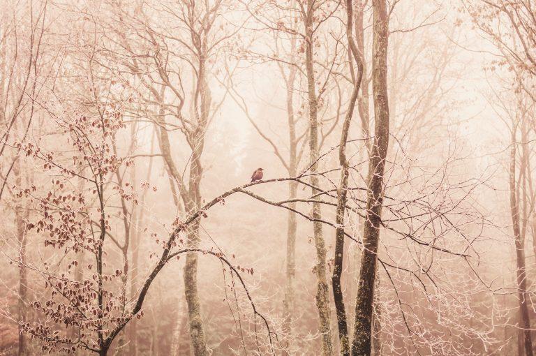 Rise and shine in het Speulderbos