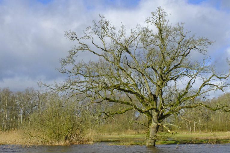 Natuurblog: de Drentsche Aa is voor even een rivier