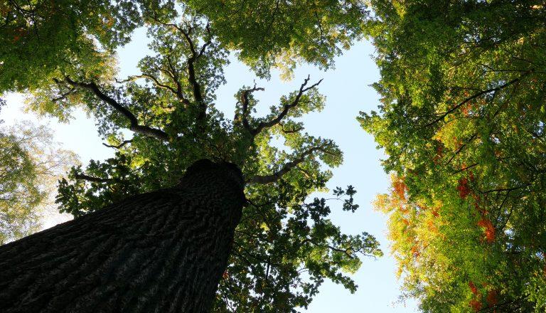 Hoeveel boomsoorten bestaan er?