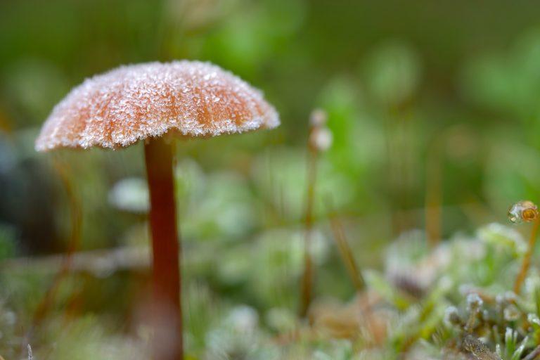Een bevroren paddenstoelenhoed