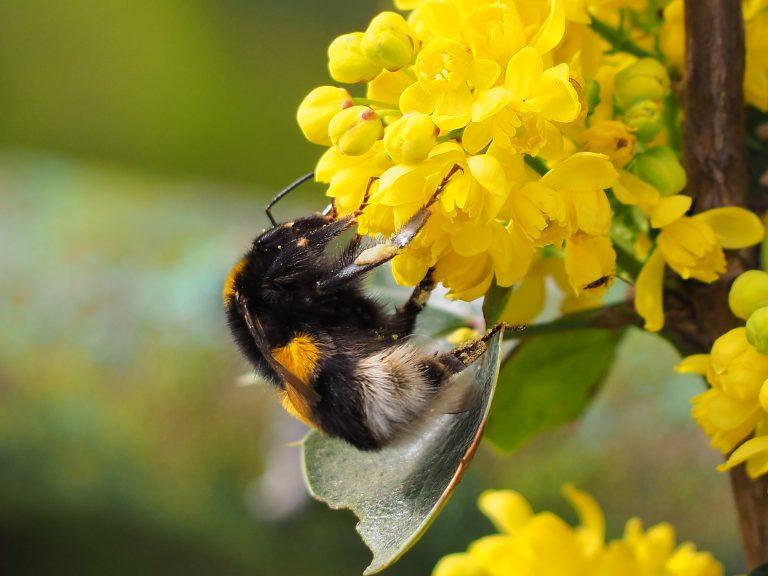 Bijenwerkdag: laat Nederland weer zzzzzzoemen