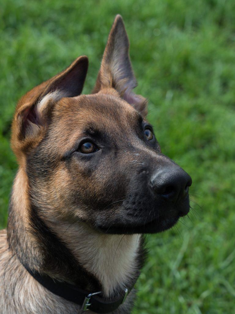 De kwestie: loslopende honden in de natuur