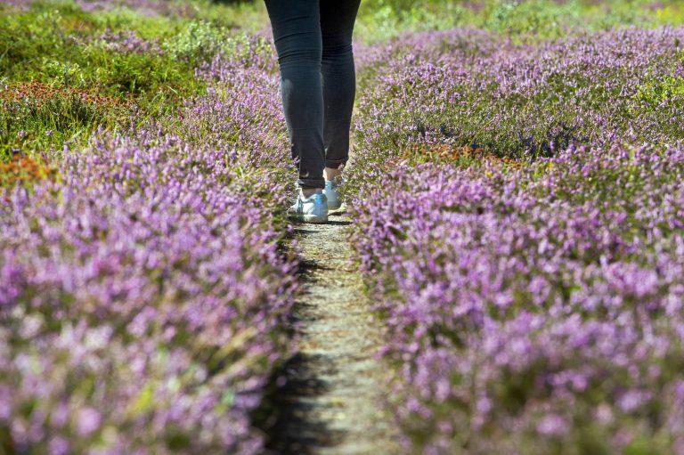 Wandelblog: loop in rondjes en kerf het landschap in je ziel