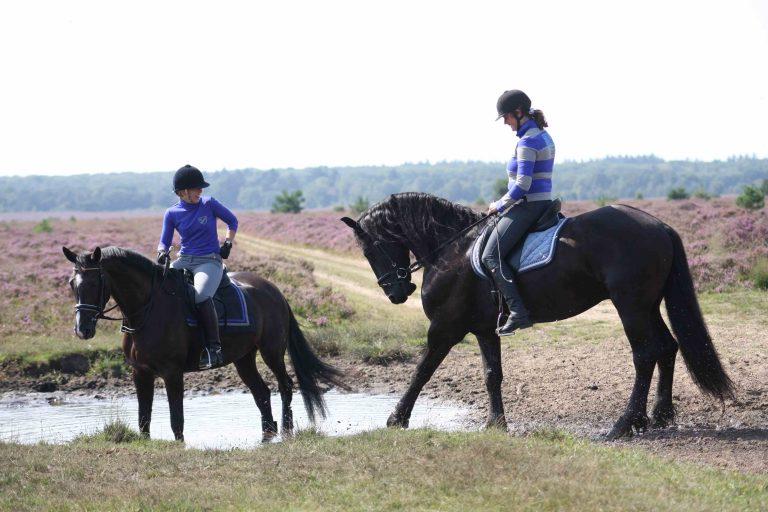 Verken de Veluwe te paard