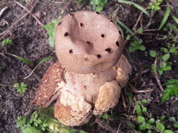 Aparte paddenstoelen