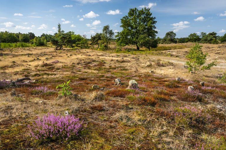 Wandelarrangement: grenshoppen in De Plateaux-Hageven