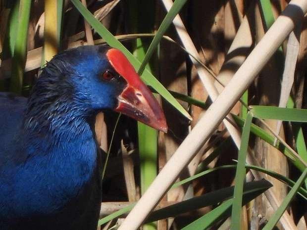 Verrassend vogelen in Merida
