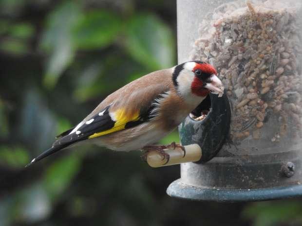 Verantwoorde vette bek voor tuinvogels