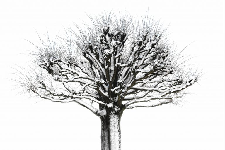 Winterkalligrafie