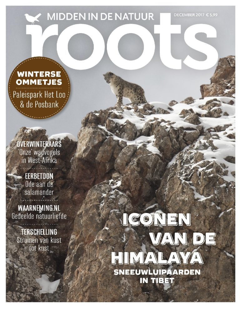 Roots 12 – november 2017