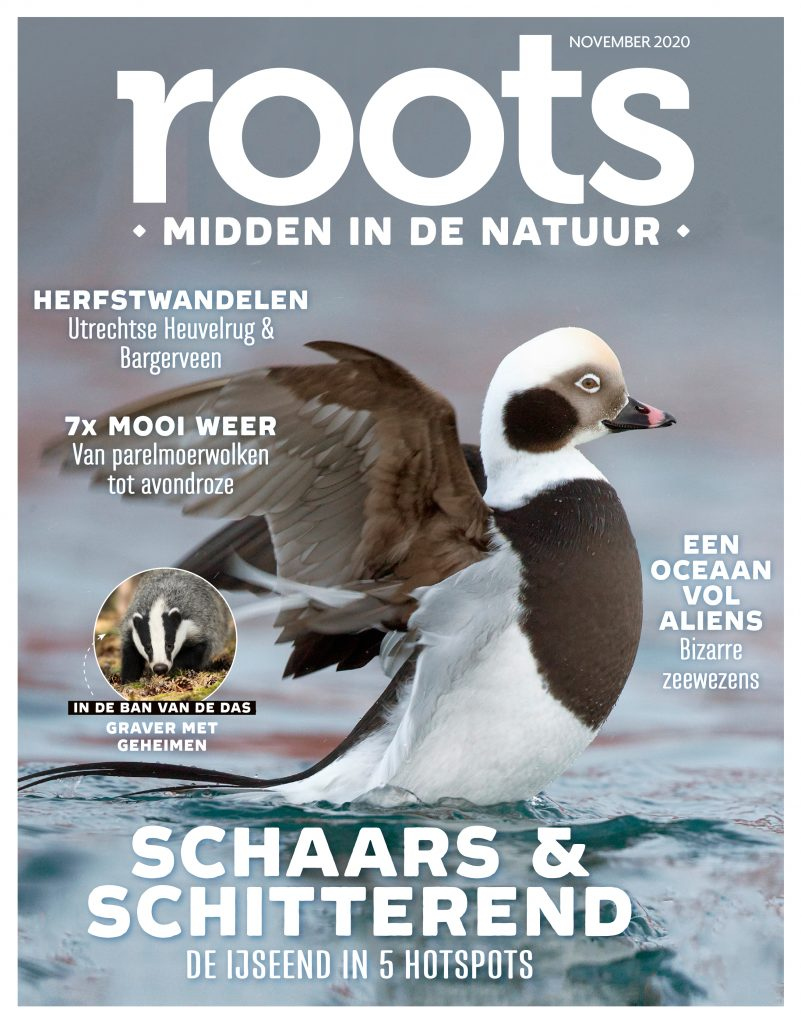 ROOTS-COVER-11-nov