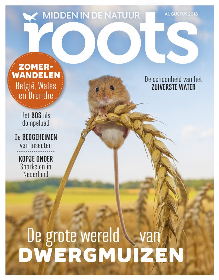 Roots augustus 2018