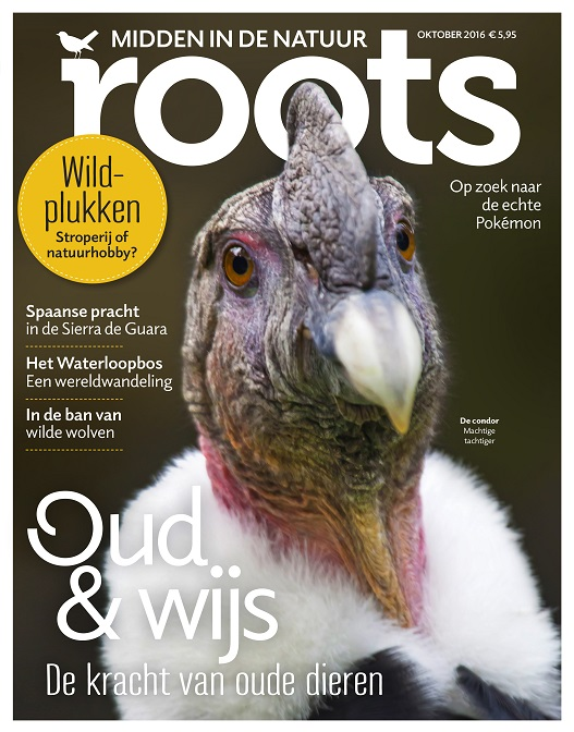 roots-cover-oktober-2016-klein