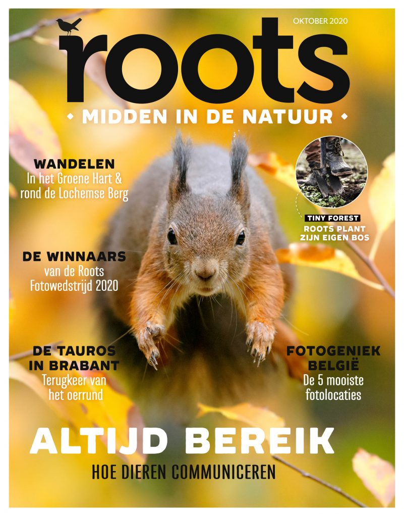 ROOTS-COVER-oktober