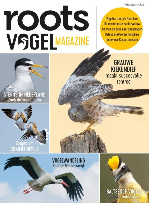 ROOTS-Vogelmagazine-1-2020