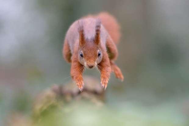 Eekhoorns zien