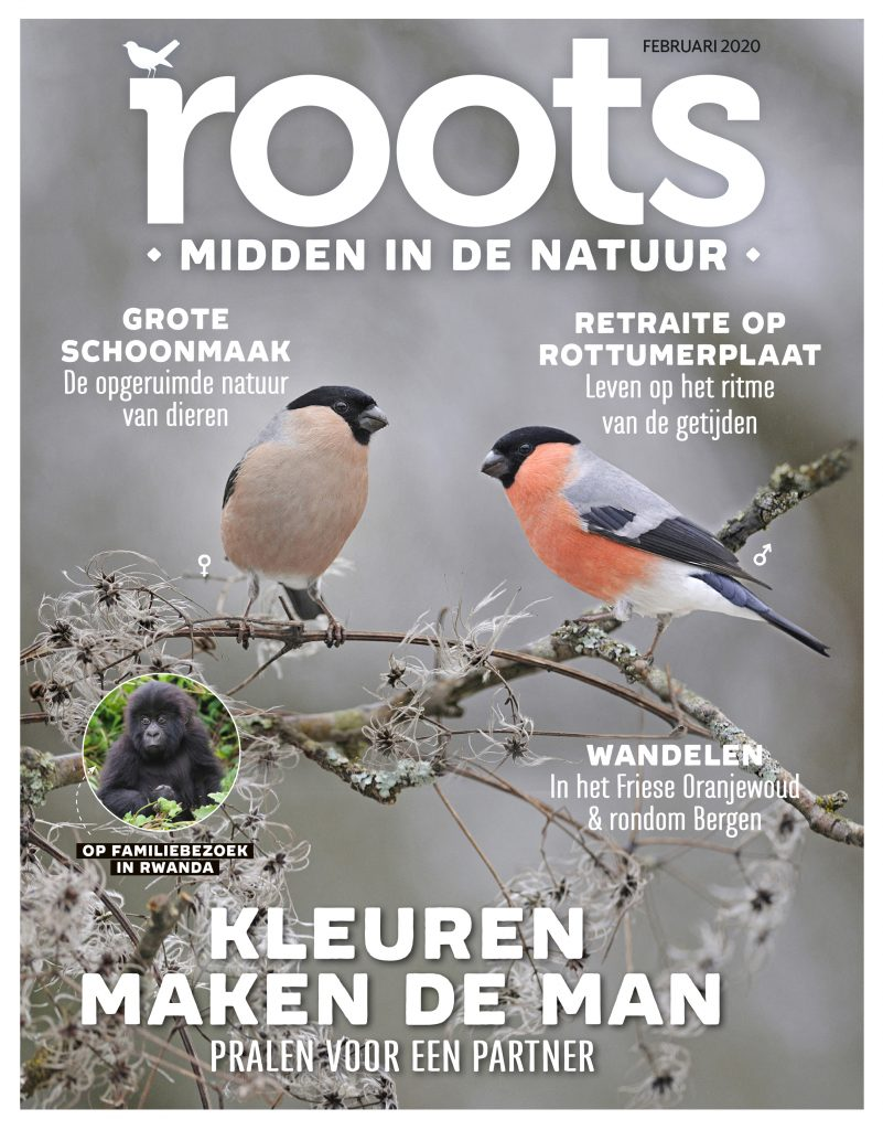 Roots-02-2020