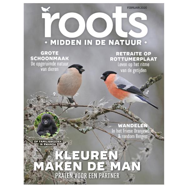 Roots editie 2 – 2020
