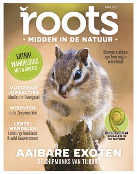 Roots editie 4 – 2021