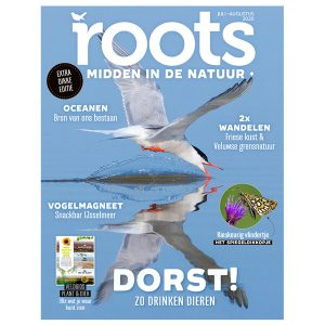 Cover Roots 7-8 2020 600x600
