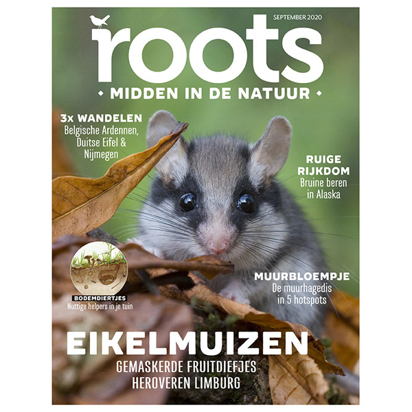 Roots-09-2020