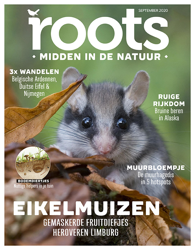 Cover-Roots-09-2020