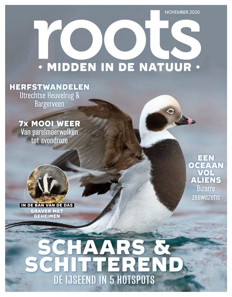 Roots editie 11 – 2020