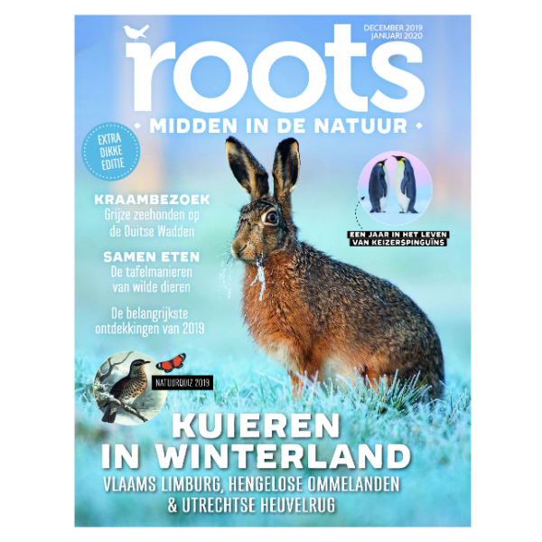Roots-12-2019_600x600