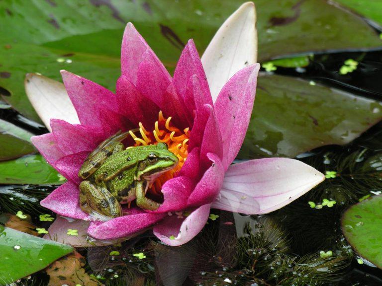Hotspots waterbloemen – een feest voor insecten én voor je ogen