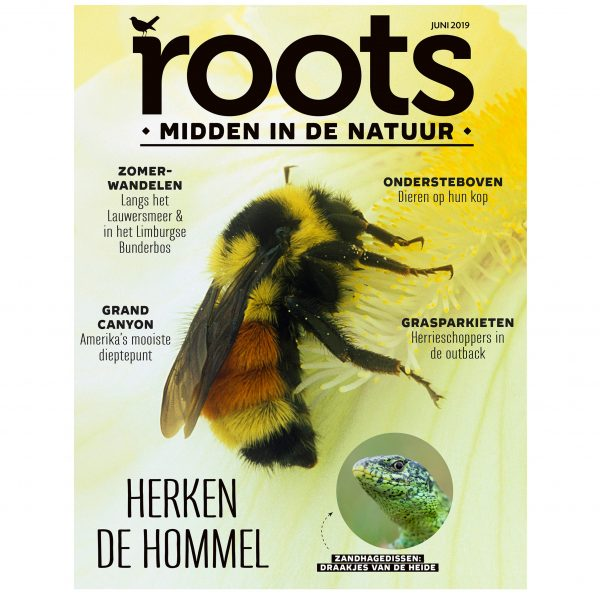 Roots-6-2019-cover
