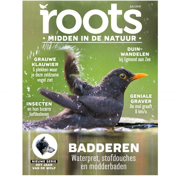 Roots-7-2019-cover