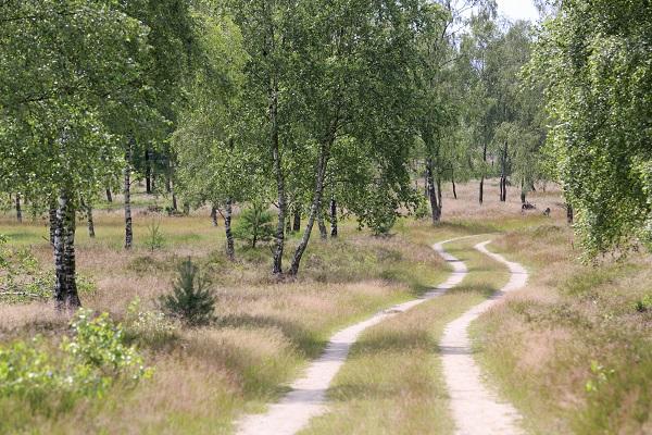 Roots lanceert het langste natuurpad van Nederland: 459 km