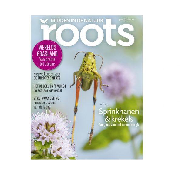 Roots editie 6