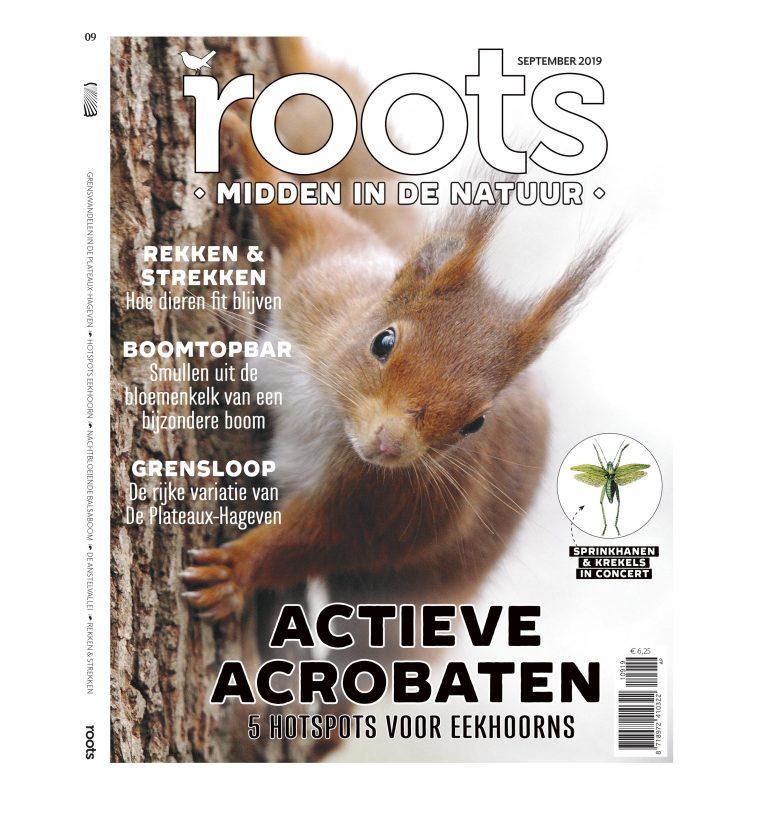Roots editie 9 -2019
