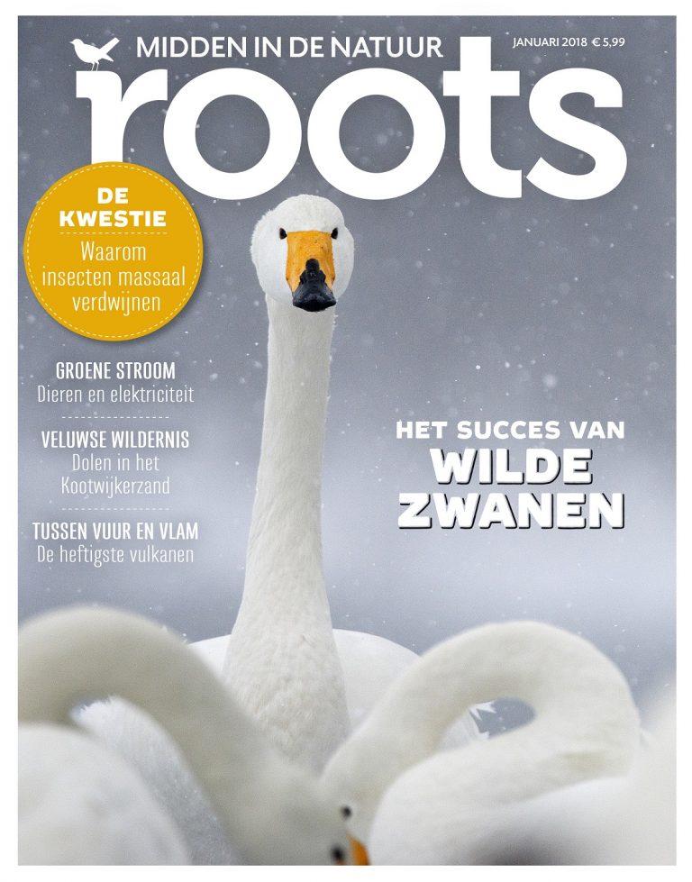 Roots editie 1-2018