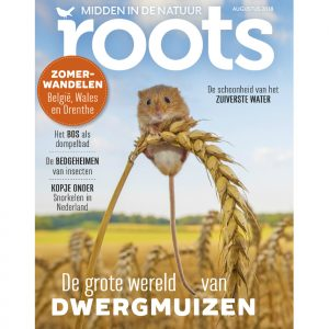 Roots8_855x900