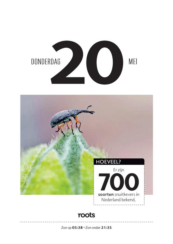 Roots_scheurkalender_2021_04