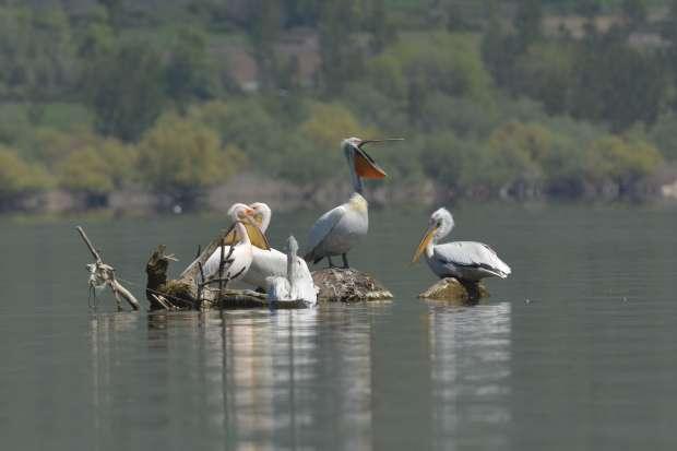 Roots vogelreis naar de Donaudelta