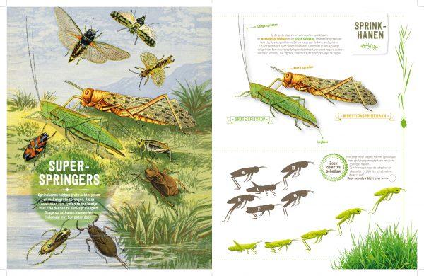 doe-boek insecten 3
