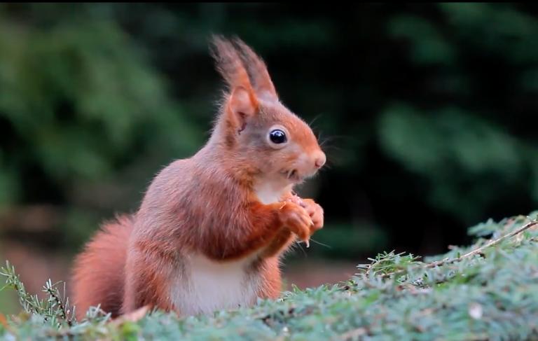 De eekhoorn, door Jeffrey van Houten