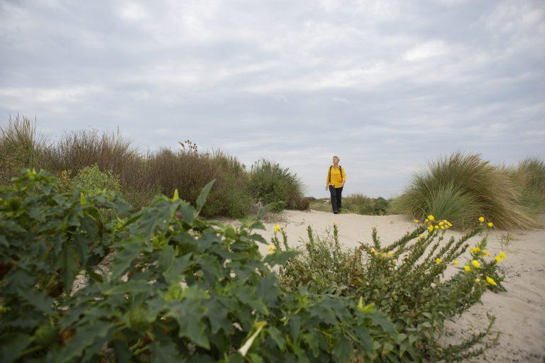 Natuurommetje Van Dixhoorndriehoek: door ruige duinnatuur
