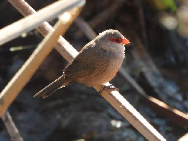 Verrassend goed vogelen in Mérida